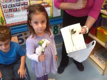 Sofía María con su planta de algodón