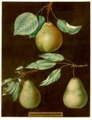 T_0611_Plate_LXXXVI_Pears