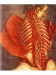 preview-anatomia-obbligatorio-simblet-anatomyforartist-intero-16